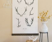 Vintage Inspired Science Posters - ANTLER STUDY VOL 2