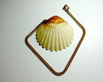 Cream Seashell Necklace