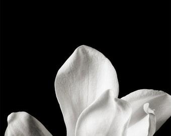 black and white_no_7