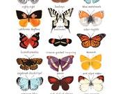 Butterflies of North America Print