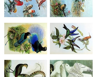 Instant Download ATC Vintage Avian Birds Collage Sheet  ACEO Backgrounds , Printables, Downloads, DigitalCollageSheets