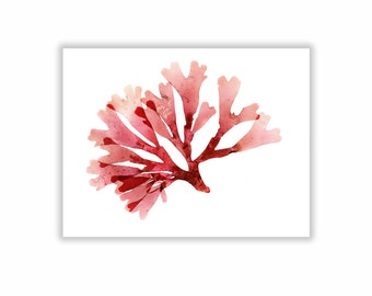 Seaweed Print Vibrant Red Botanical Artwork, Ocean, Sea, Coastal Living, Beach, 8x10, Wall Decor, Matted Print