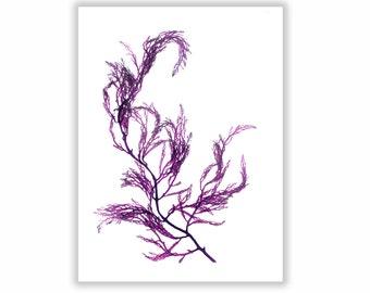 Purple Botanical Artwork, Seaweed Print, Beach Art, Coastal Living, Ocean Decor, Matted Print, 8x10
