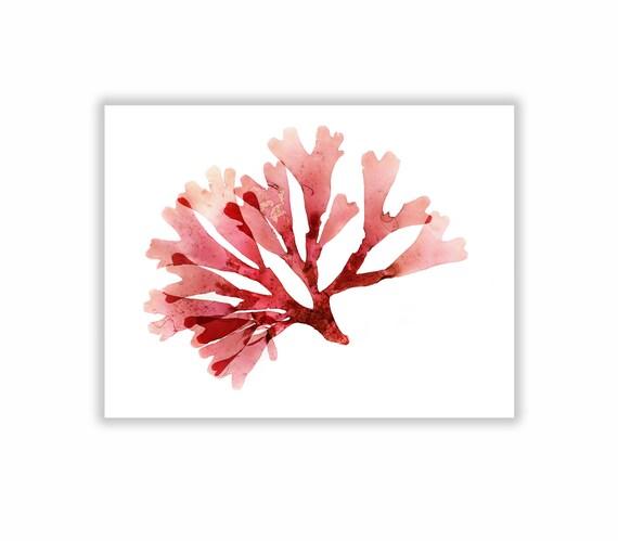 Seaweed Print Vibrant Red Botanical Artwork, Ocean, Sea, Coastal Living, Beach, 8x10, Wall Decor, Matted Print