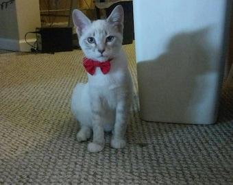 Kitten Bow Tie Collar for Valentines Day