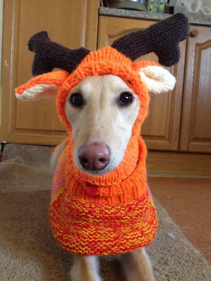 Free Crochet Dog Reindeer Hat Pattern : Whippet reindeer hat knitting pattern FREE UK Postage
