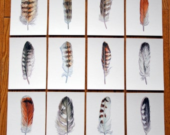 Raptor Feather Collection - Archival Quality Prints