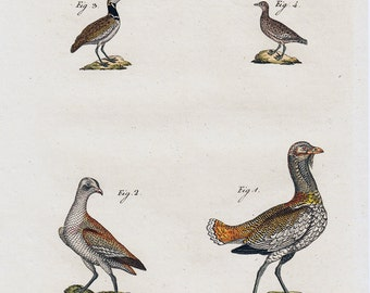 1790 Antique print, bustard, Canada geese, hand colored, 222 years old nice print.