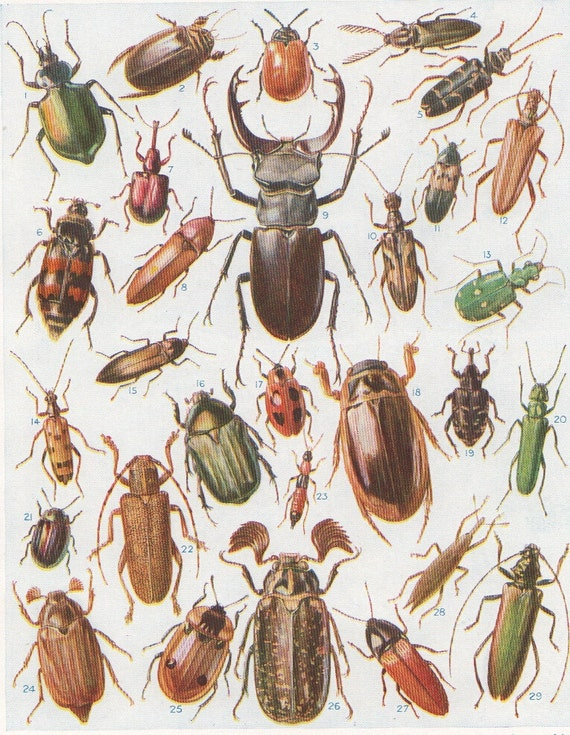 Antique print british beetles vintage insect print beetles for Bug themed bedroom ideas