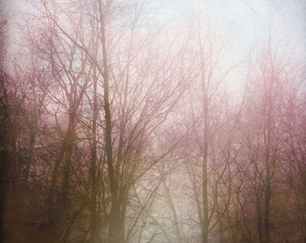 Tree Landscape Photography Misty Pink Tree Softly Lit Forest Gold Pink Wall Art Nature 8x8