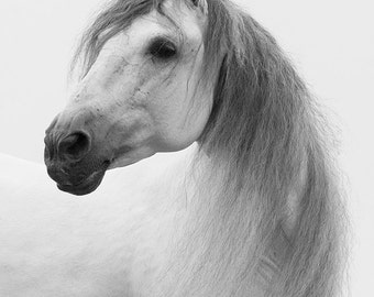 Andalusian Stallion Looks - Fine Art Horse Photograph - Horse - Black and White
