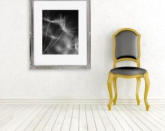 black and white dandelion photograph fine art photo macro wall decor nature dark