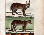1802 Antique Print Hand Colored French Engraving Cats Cougar and Desert Lynx  Natural History, Buffon