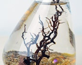 Marimo Terrarium - Japanese Moss Ball aquarium - in rolling vase - with brown sand - gold marbles - and sea fan
