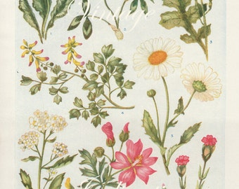 Vintage Antique 1930s Flowers botanical bookplate original lithograph art print illustration 4417