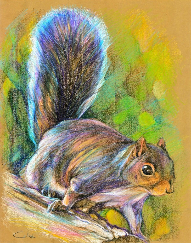 Squirrel Mike lurking Original Color Pencil Drawing 11