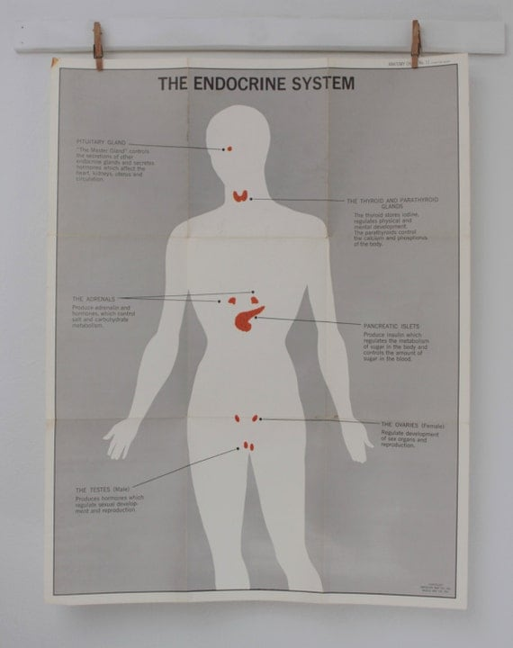 Parts Of The Endocrine System From The American Medical Manual Guide