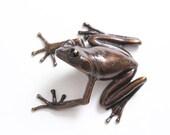 Tree frog - Bronze (large)
