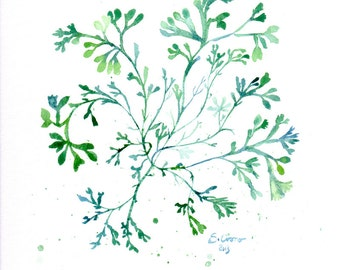 Green seaweed - Print of watercolor illustration - Green home decor - Beach cottage wall art
