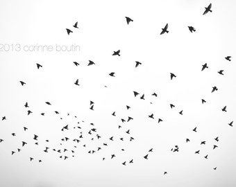 birds flying, winter fine art 5x7 signed print