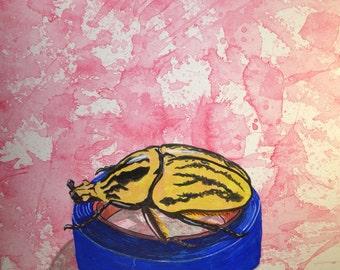 Goliath Beetle on Blue Painters Tape
