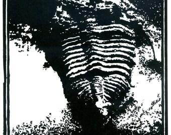 Trilobite Print: hand-pressed lino cut print 21cm by 24cm.