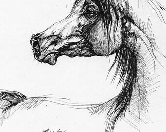 Bay arabian horse original pen drawing
