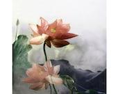 Peach lotus, digital print, fantasy flower print, photomontage, modern floral fantasy, fine art print, home decor, abstract art, wall art