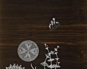 Haeckel's Sea Creature Collage