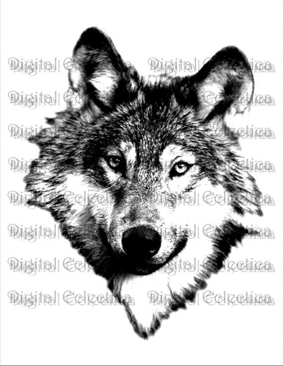 Wolf Face. Wolf PNG. Animal PNG. Wolf Prints. Wolf Images. Wolf Picture. Wolf Art.Wolf Clipart. Wolf Drawings. Wolf Illustrations. No. 0055.