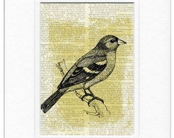 finch, chaffinch dictionary page print