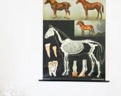 Vintage Pull Down Chart, Horse School Chart, Jung Koch Quentell