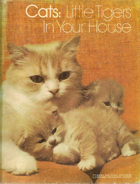 VINTAGE KIDS BOOK Cats Little Tigers In Your House