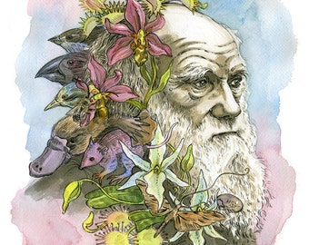 Charles Darwin II portrait- illustration print in multiple sizes