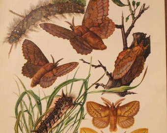 Vintage Decoupage Print - Moths-Caterpillars - West Germany