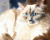 Ragdoll Siamese Cat Art Print of my Watercolor Ragdoll