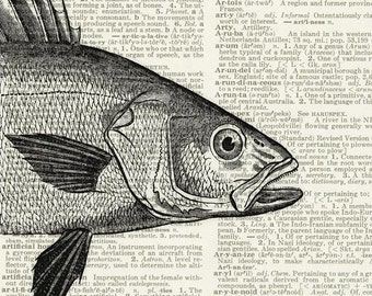 fish portrait print