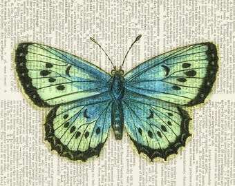 aqua-green butterfly print