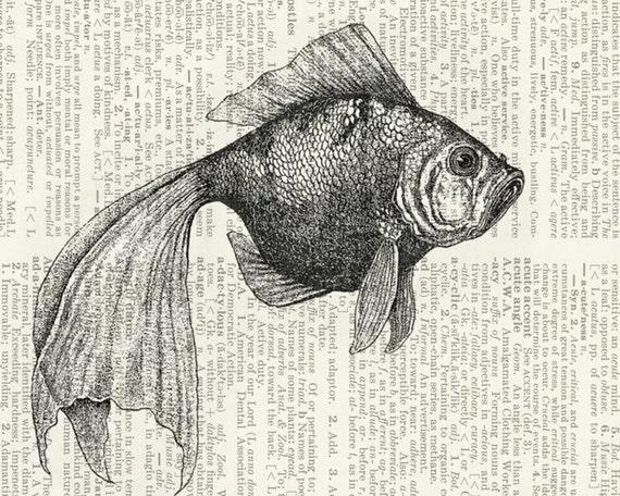 goldfish I dictionary page print