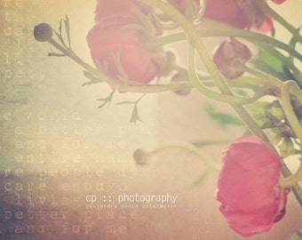 ranunculus (1) - limited edition photograph