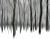 "From the series ""Nature Graphics"": ""About Trees"" - Original Signed Fine Art Photography Print 6x6 inches Trees without leaves in winter snow"