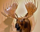 Moose Head Wood Sculpture by Jason Tennant