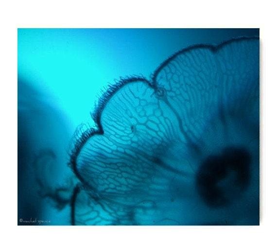 Moonjelly Print Blue Water Ocean Art Jelly Print Blue Ocean Sea Decor Beach Cottage Decor