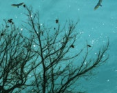 Nature photography, bare trees, crow, raven, black bird, birds, haunted forest, teal, aquamarine, turquoise, black
