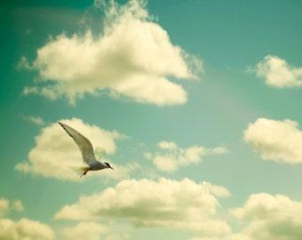 Nature photography, bird photography, dreamy, beach print, green, teal, cream, tern, gull, skyscape, dreamy