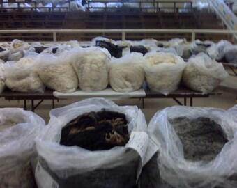 Wool Fleece, Unwashed