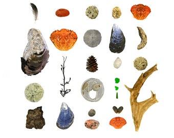 Beachcombing series No. 26, 8x8 photo - feather, driftwood, crab shells, sea urchins