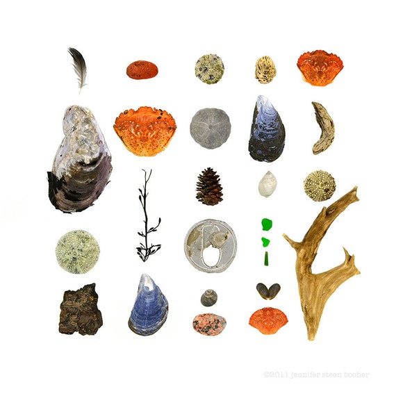 Beachcombing series No. 26, 8x8 photo - feather, driftwood, crab shells, sea urchins