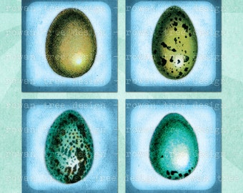 VINTAGE BIRDS EGGS Digital Collage Sheet 1.5in or 1in Squares Printable Download - no. 0075