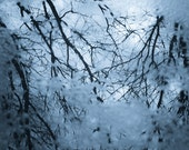 Cold Reflection, Icy Blue, Tree Branches, Abstract Color Photograph, Wall Art, Home Decor, Original Signed Photography